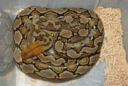 Продам экзотических животных и рептилий Белгород