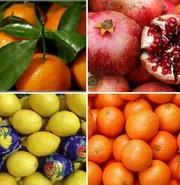 Свежие цитрусовые оптом из Турции